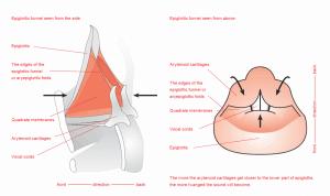 twanging epiglottis