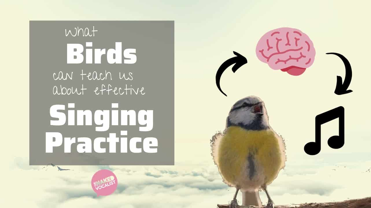 Bird-Brained – What Birds Can Teach Us About Effective Singing Practice