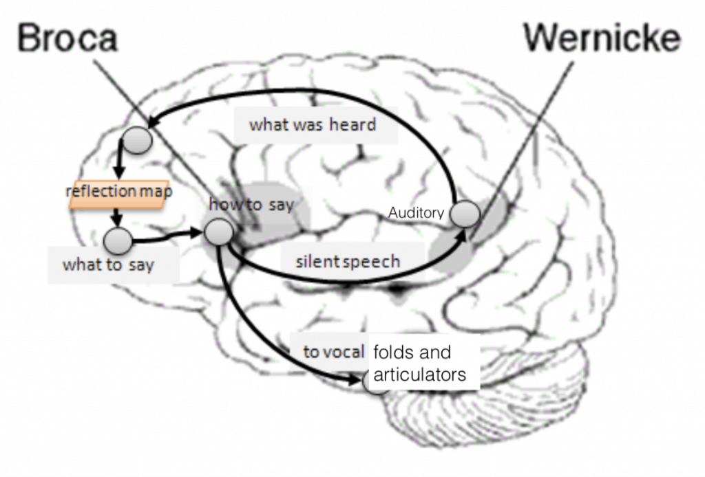 Singing and the brain